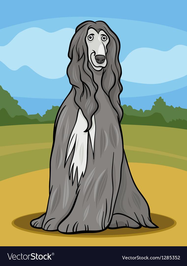 Afghan hound dog cartoon vector image