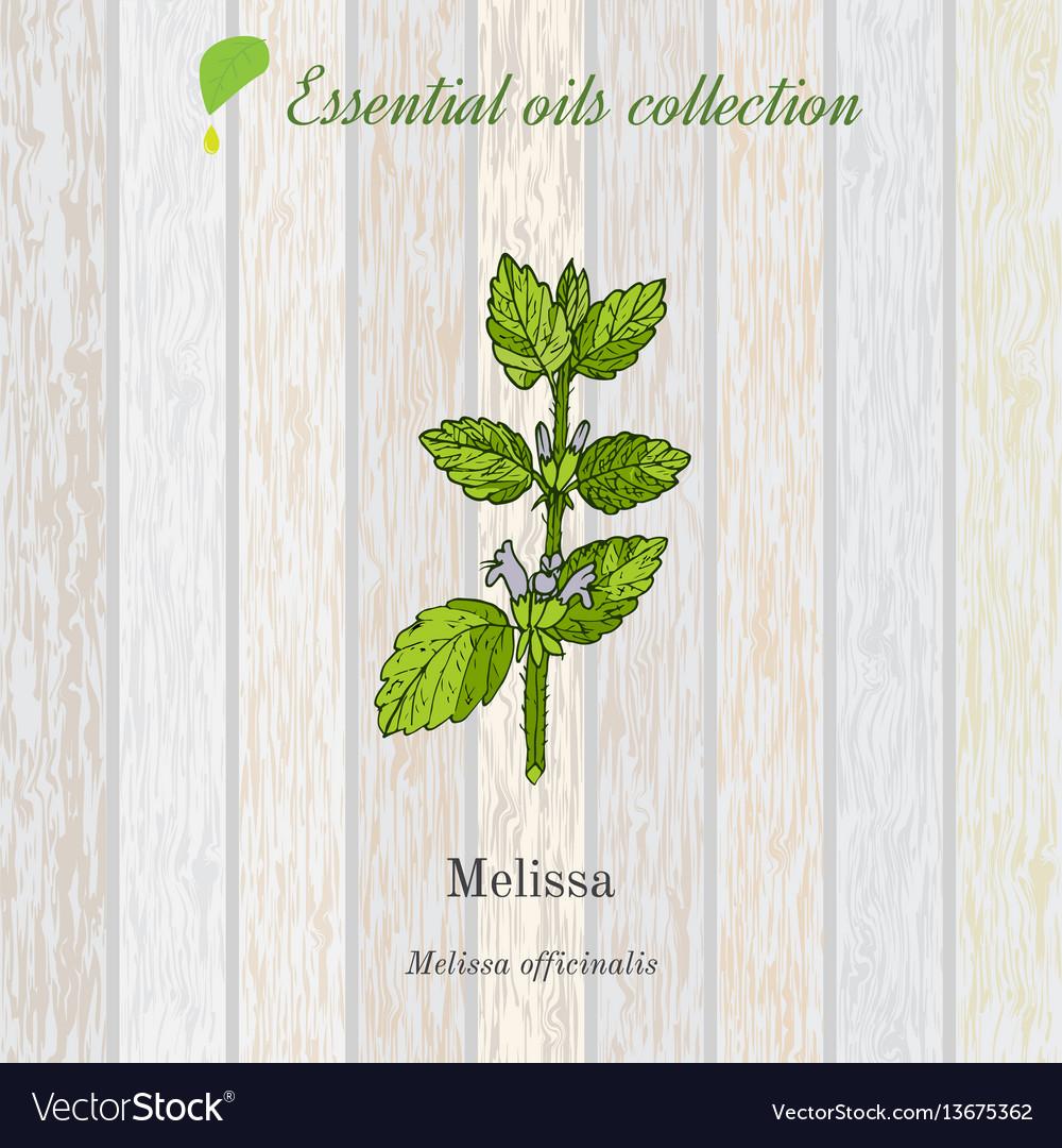 Melissa essential oil label aromatic plant