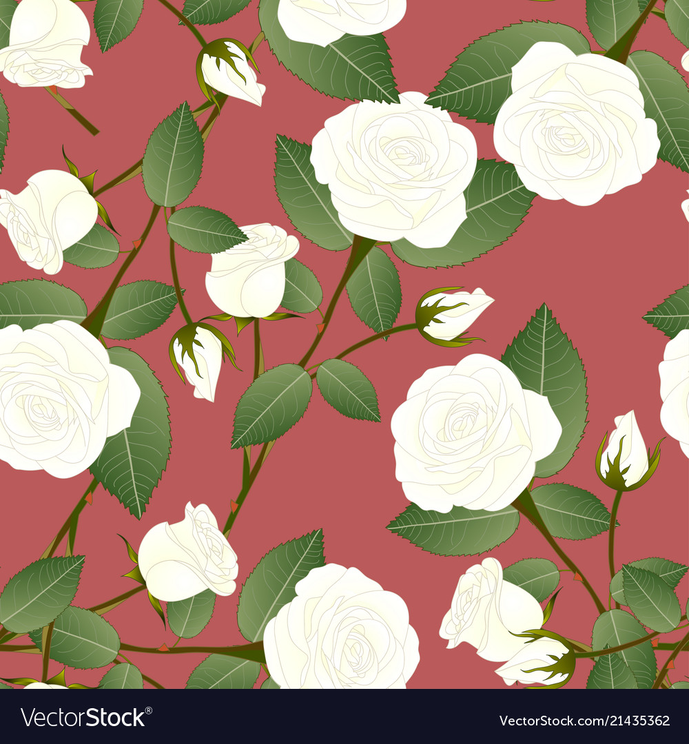 White rose - rosa on red brown background