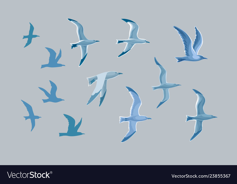 Sea gulls set