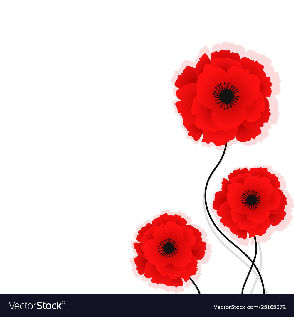 Nature Background With Red Poppies Flowers Vector Image