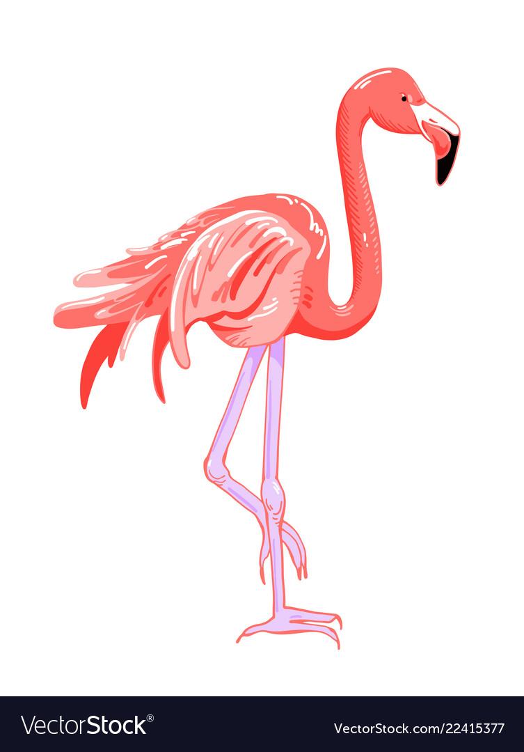 Hand drawing pink flamingo tropical bird