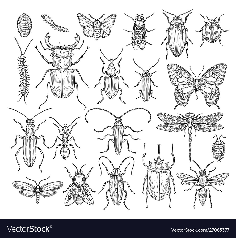 Insects sketch butterfly beetle and fly ant