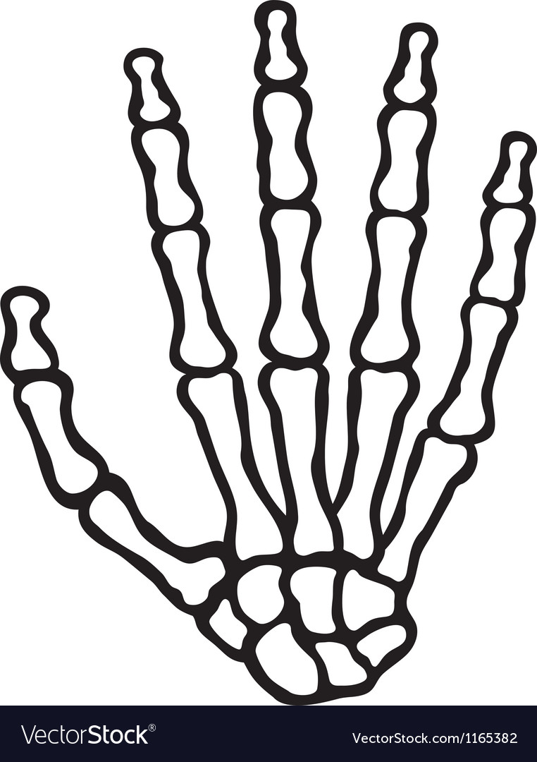 human skeleton hand royalty free vector image vectorstock rh vectorstock com skeleton hand peace sign vector skeleton hand vector free download