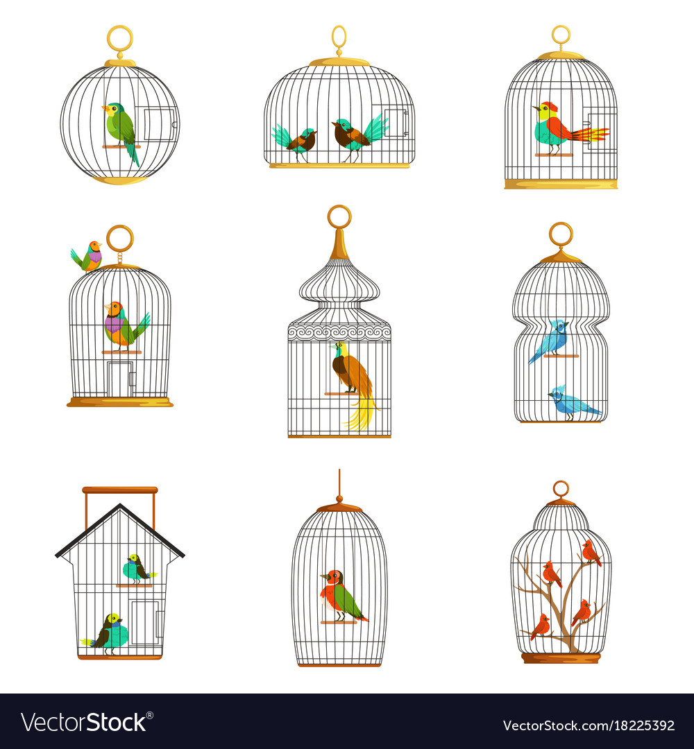 Bird cages with different birds set of