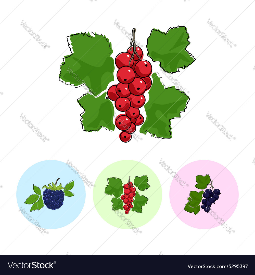 Fruit Icons Redcurrant Blackberry Blackcurran vector image