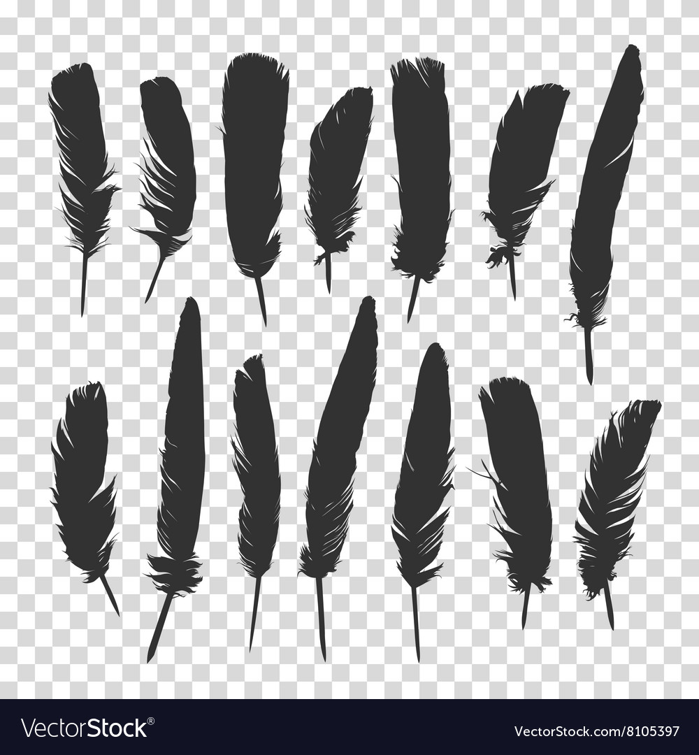 Hand drawn feathers set a transparent background