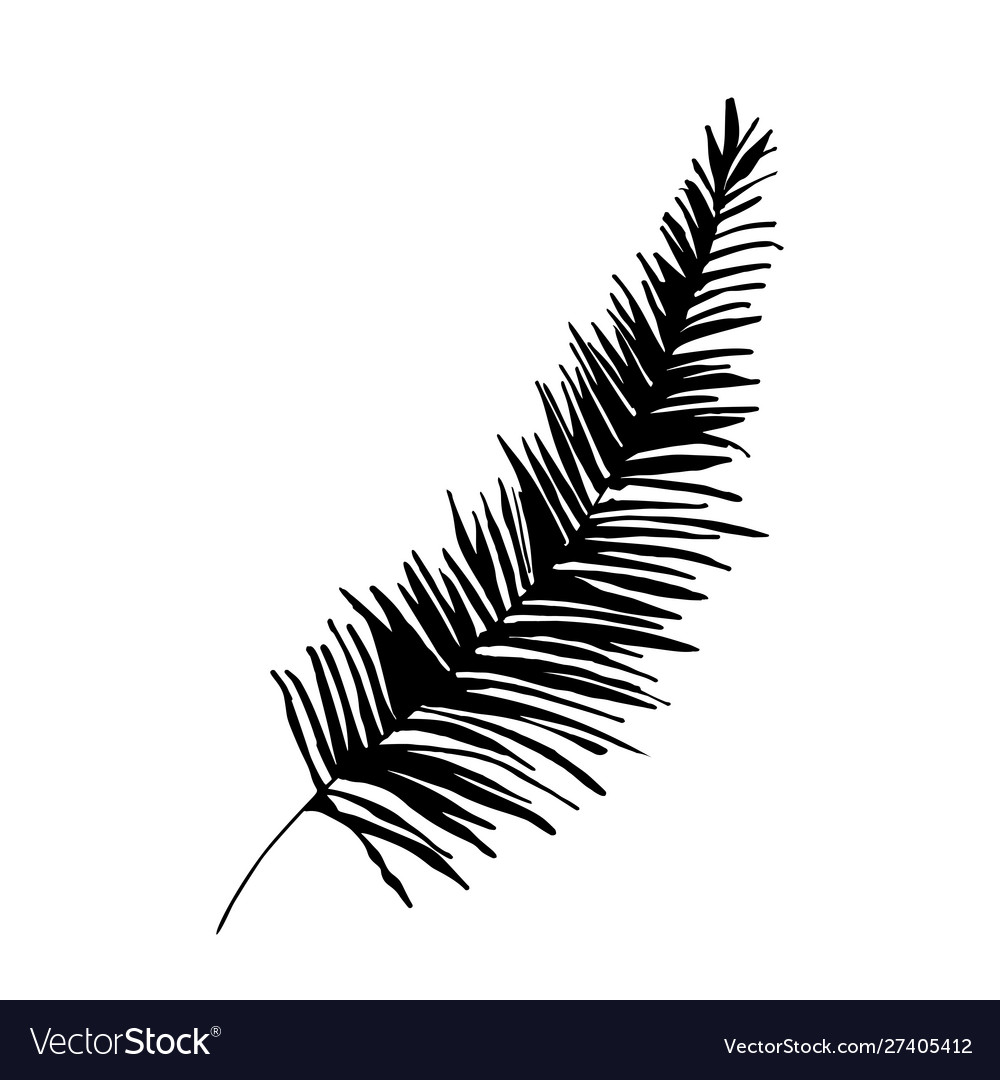 Palm tree twig silhouette