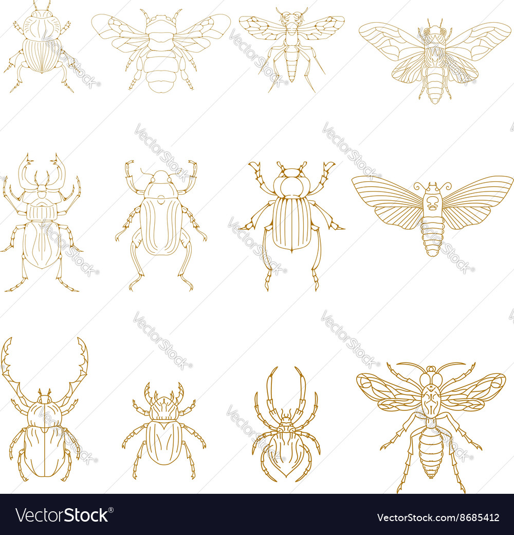 Set of Insects in