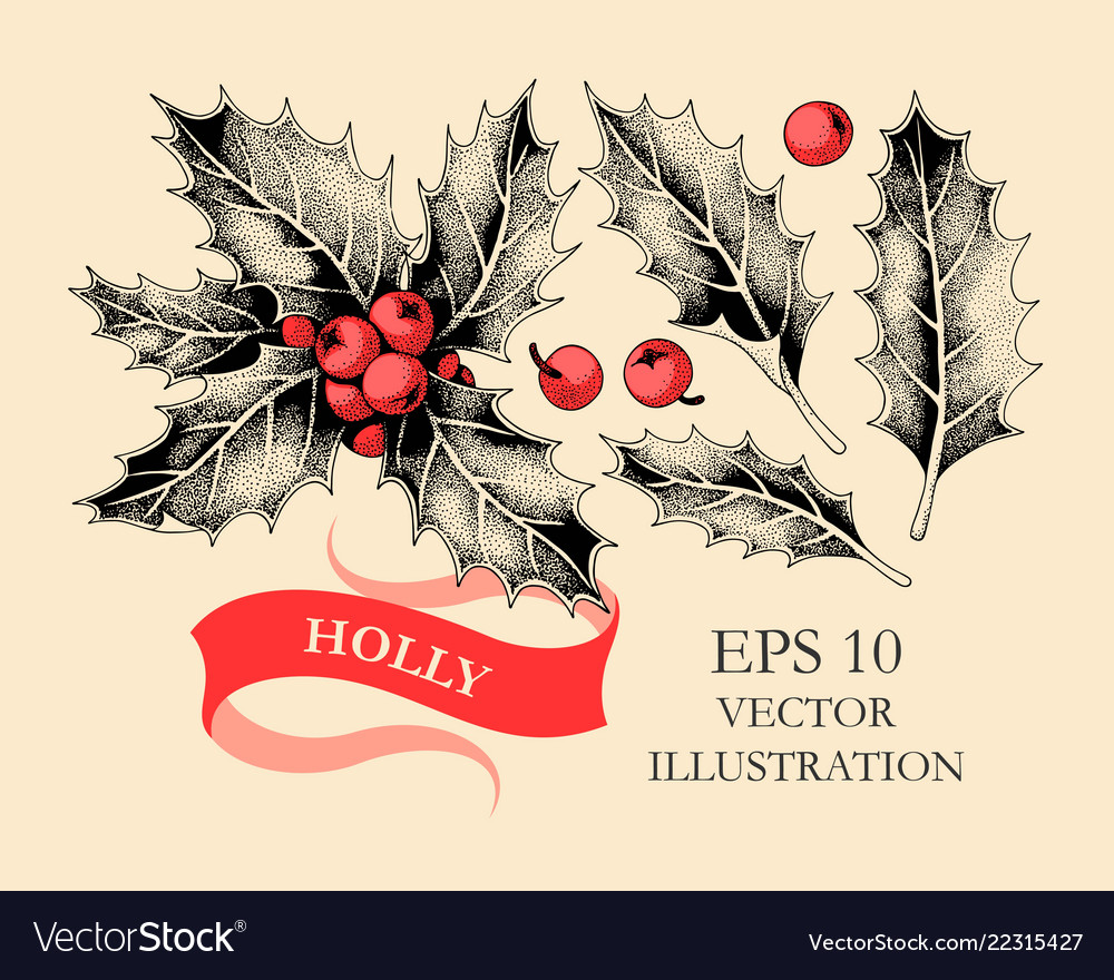 Set of holly leaves and berries