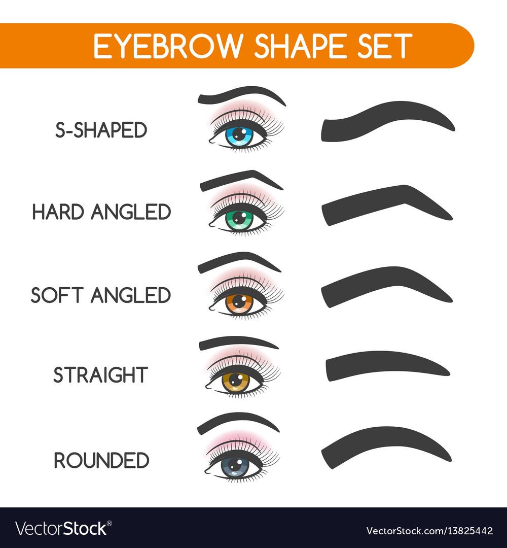 Women Eyebrows Shapes Set Royalty Free Vector Image