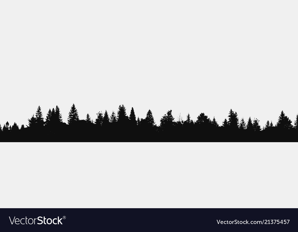 Panorama realistic forest
