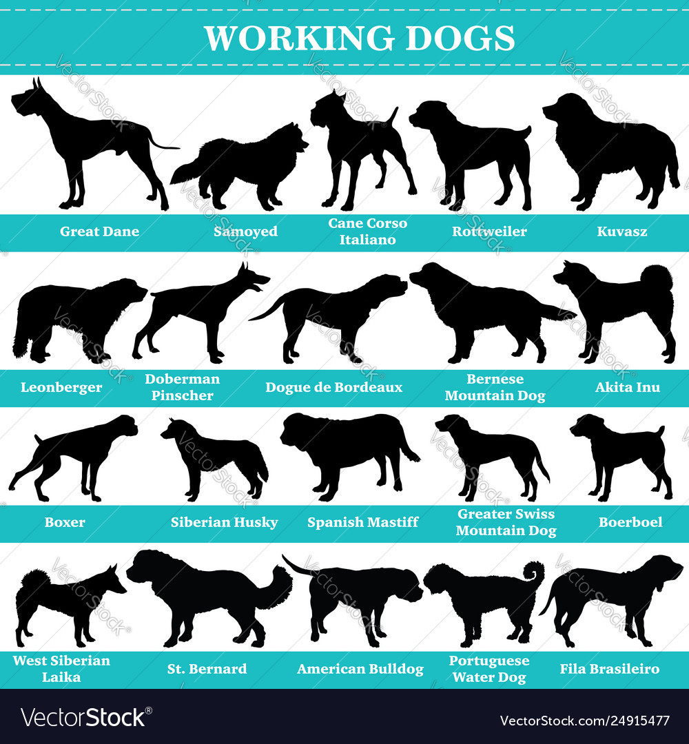 Working dogs silhouettes