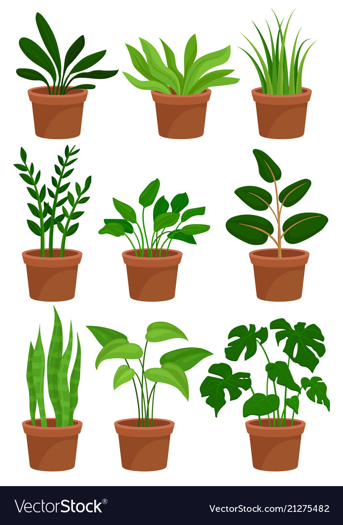 Home Decorative Plants Set Houseplants For Vector Image