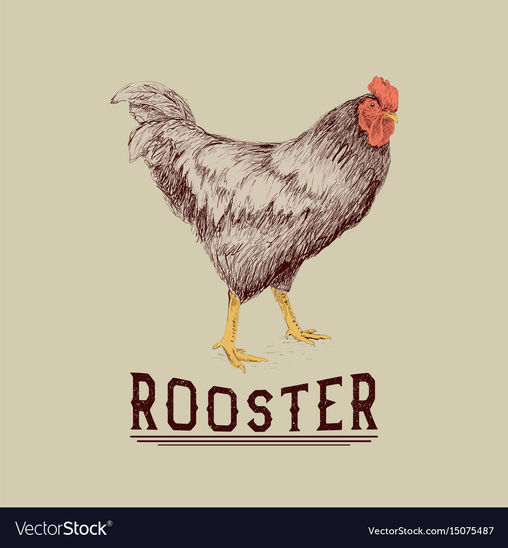 Rooster drawn in hand drawn style