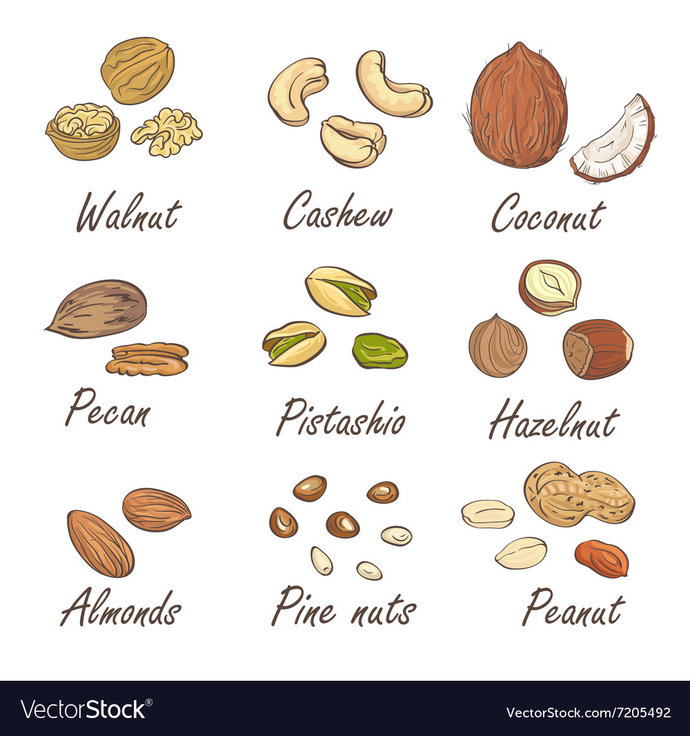 Set of hand sketched nuts on white background in