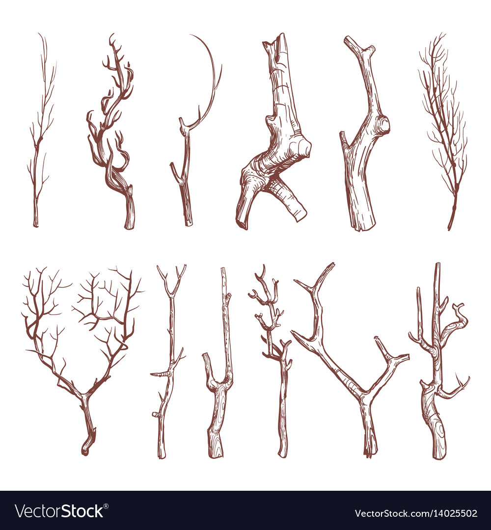 Sketch wood twigs broken tree branches set