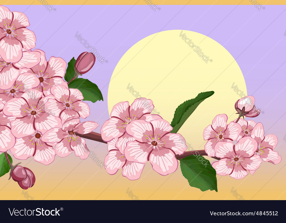 Apricot blossoming branch