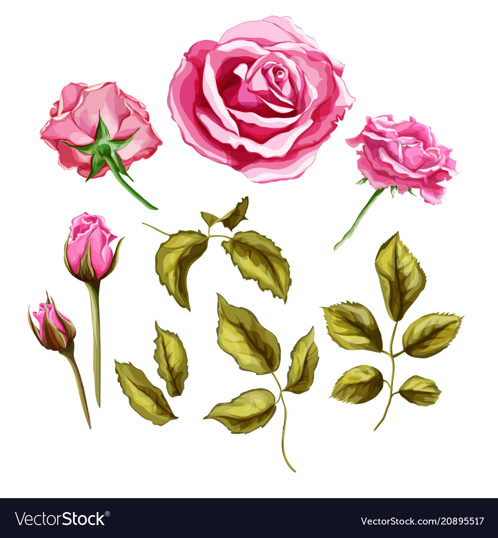 Realistic rose flower leaves stem set