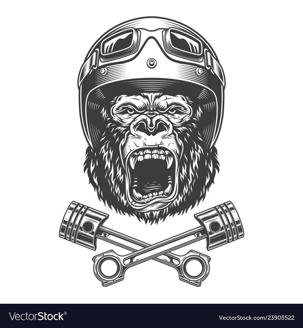 Ferocious gorilla head in motorcycle helmet