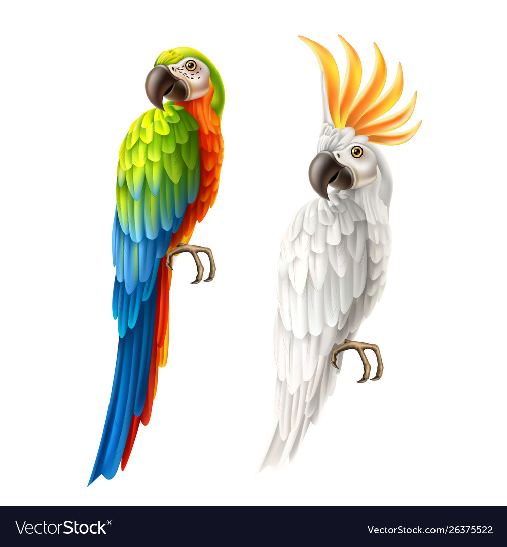Realistic parrots macaw and cockatoo set