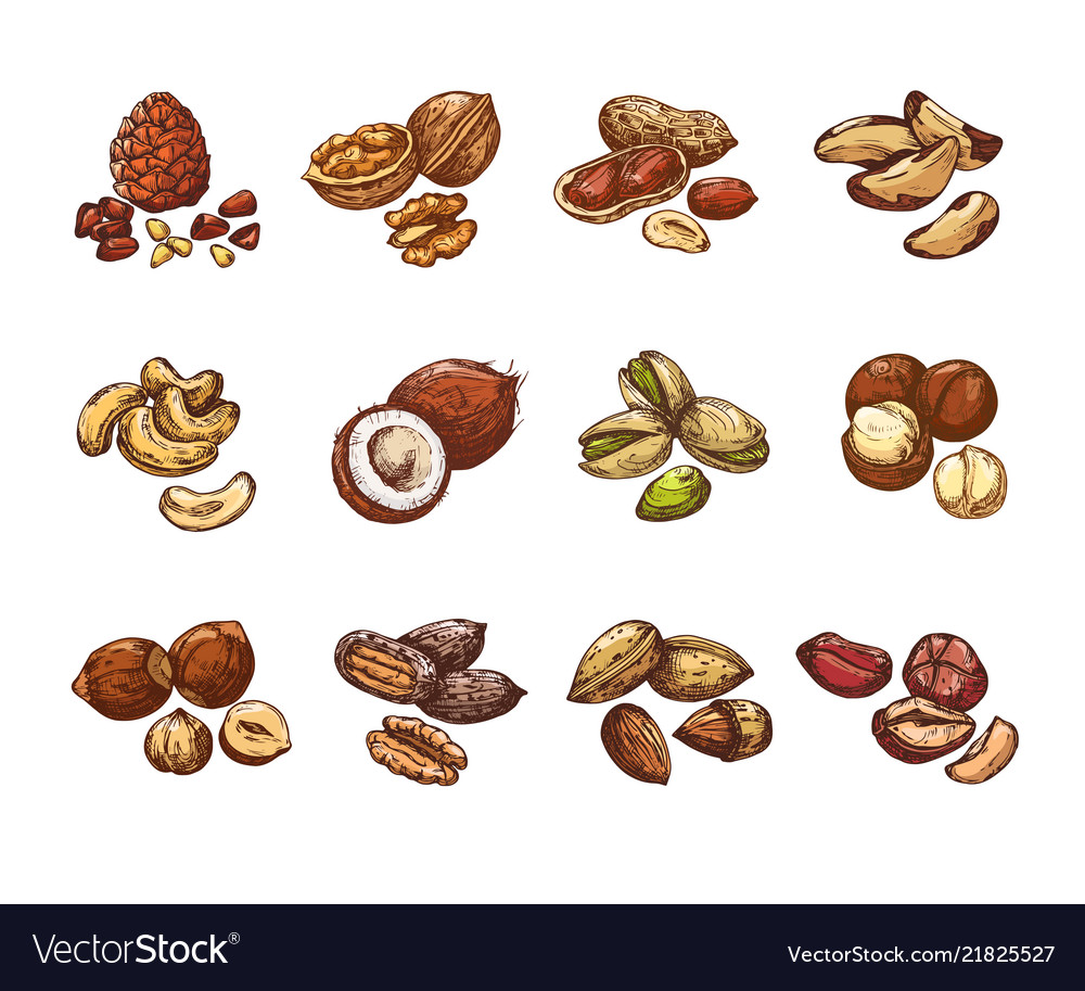 Cartoon nuts and seeds hazelnut and coconut