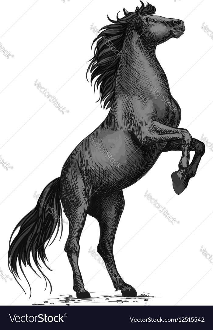 Rearing Black Horse Sketch For Equine Sport Design