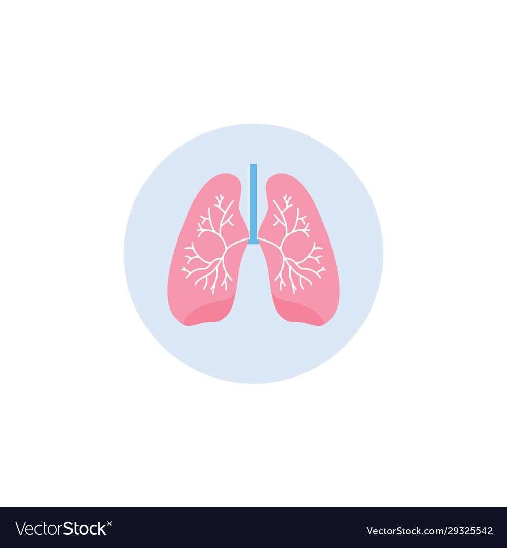 Respiratory system lungs icon in circle flat