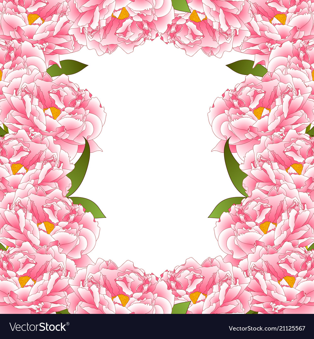 Pink Peony Flower Border Royalty Free Vector Image