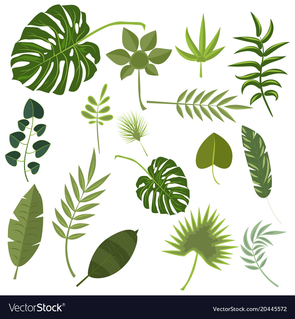 Tropical leaves green jungle