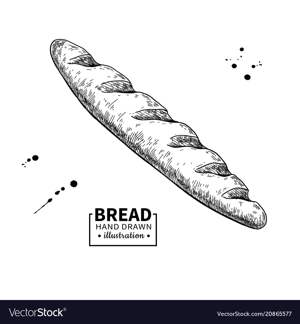 Baguette bread drawing bakery product