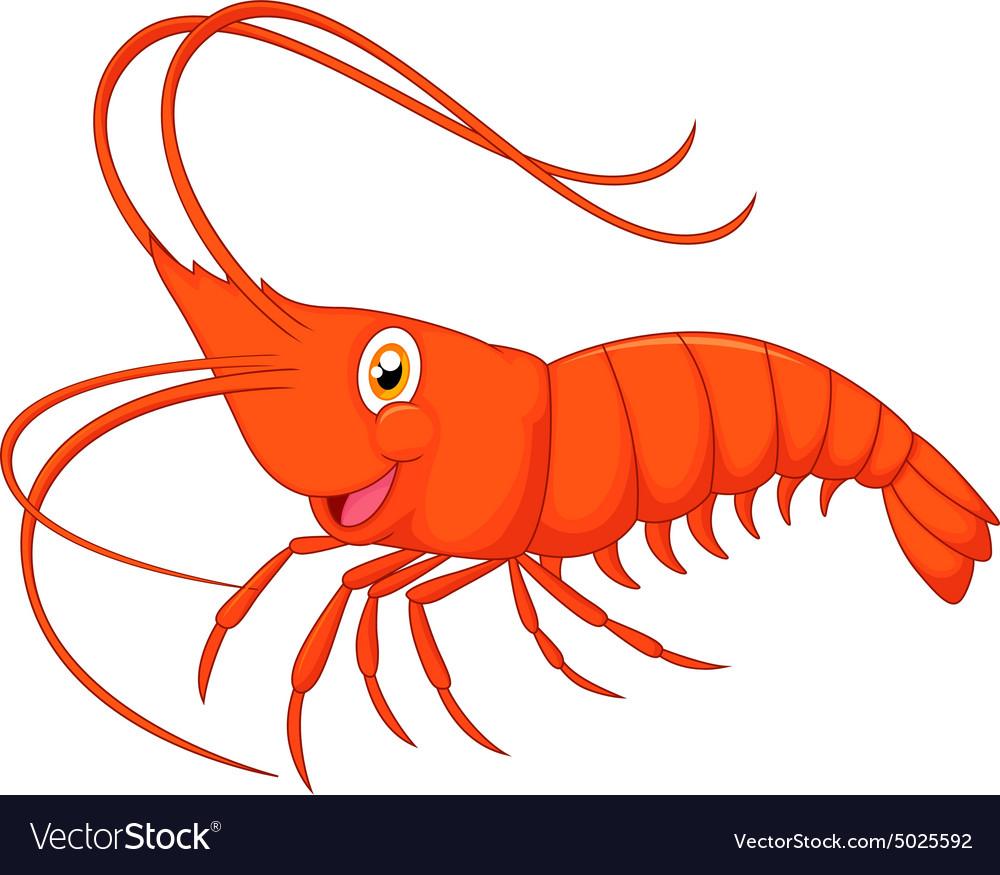 Cute cartoon shrimp Royalty Free Vector Image - VectorStock