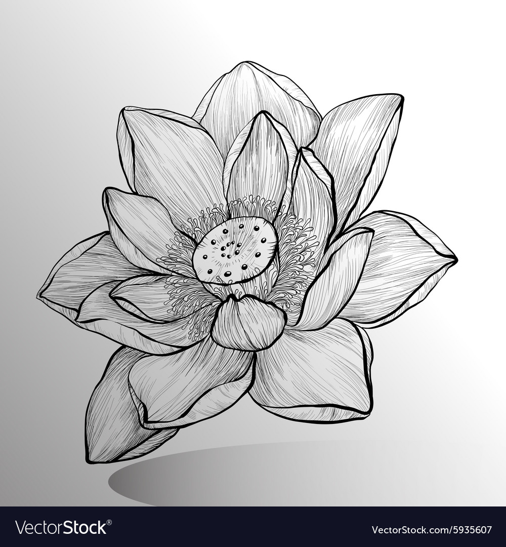 Lotus flower sketch royalty free vector image vectorstock lotus flower sketch vector image izmirmasajfo
