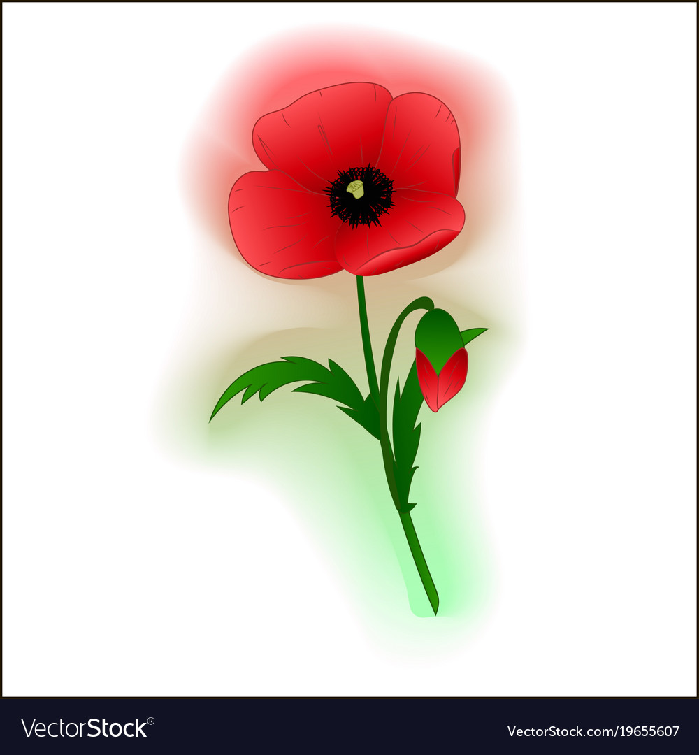 Red poppy flower royalty free vector image vectorstock red poppy flower vector image mightylinksfo
