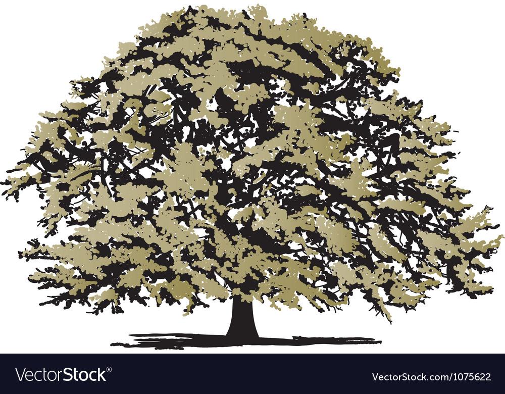 oak tree royalty free vector image vectorstock rh vectorstock com oak tree vector icon oak tree vector art