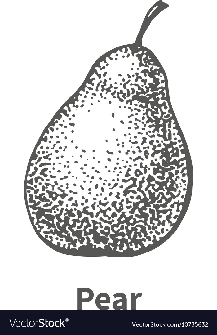 Hand-drawn pear vector image