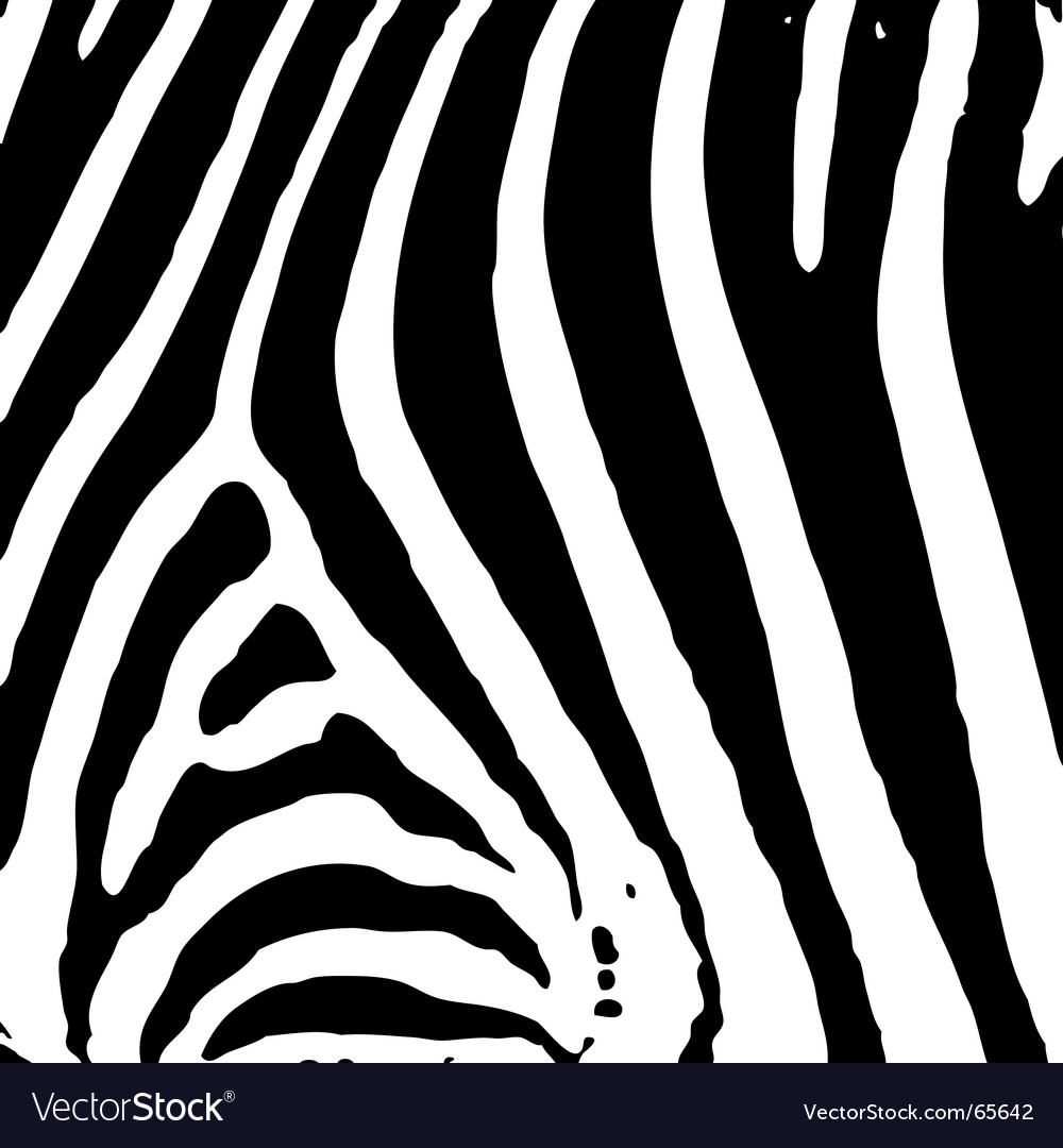 illustrated abstract Zebra black and white print background. Keywords:
