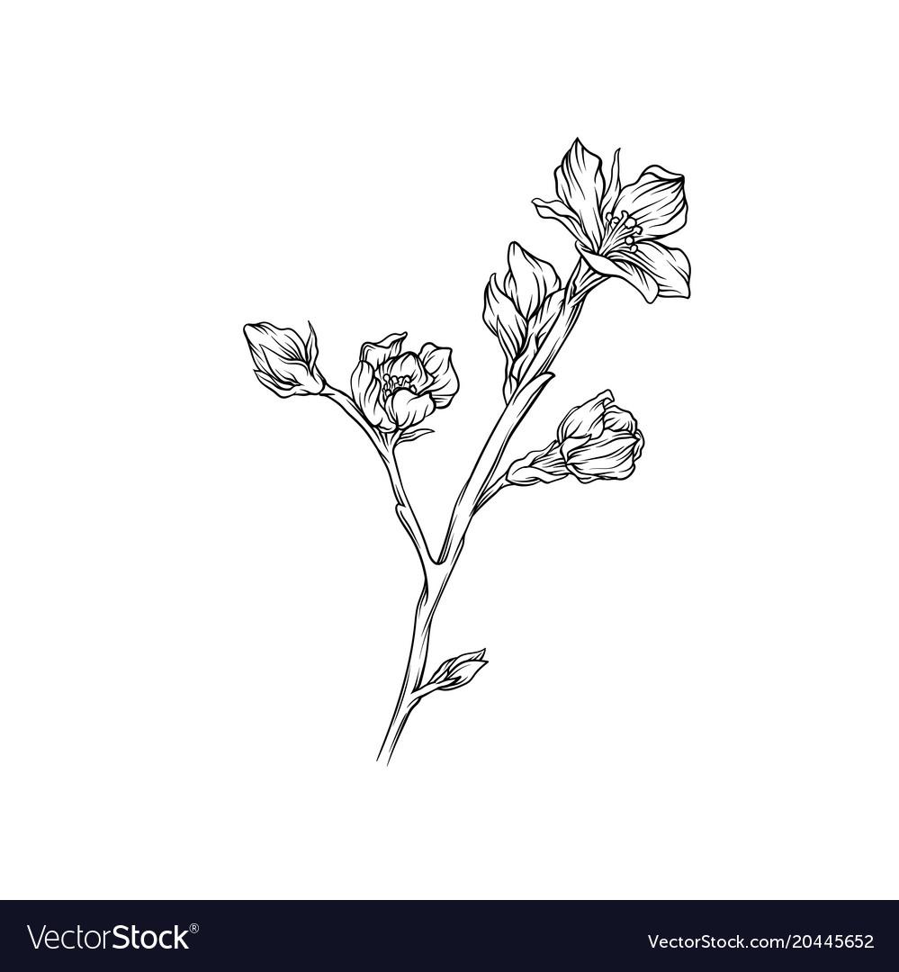 Flower branch monochrome sketch floral design vector image