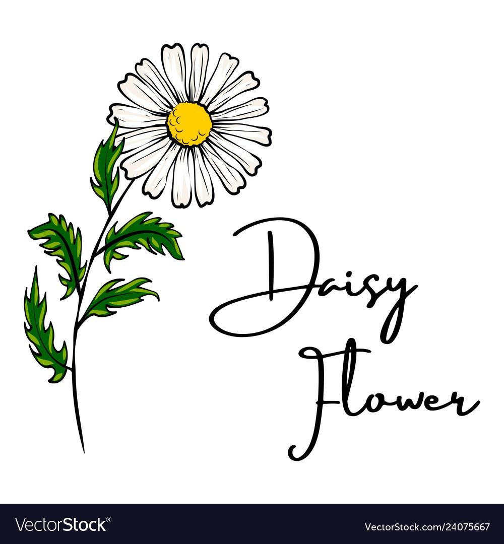 Daisy flower drawing