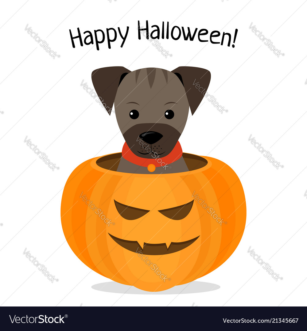 Halloween Happy dog pictures forecasting to wear for winter in 2019