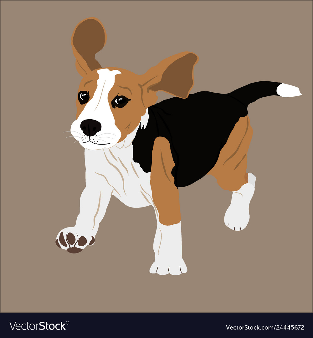 Beagle image puppy dog