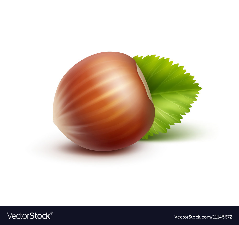 Full Unpeeled Hazelnut with Leaves Isolated