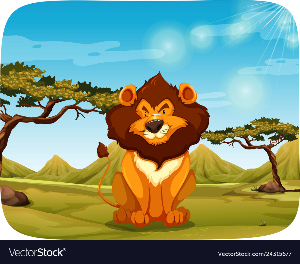 A lion in the nature