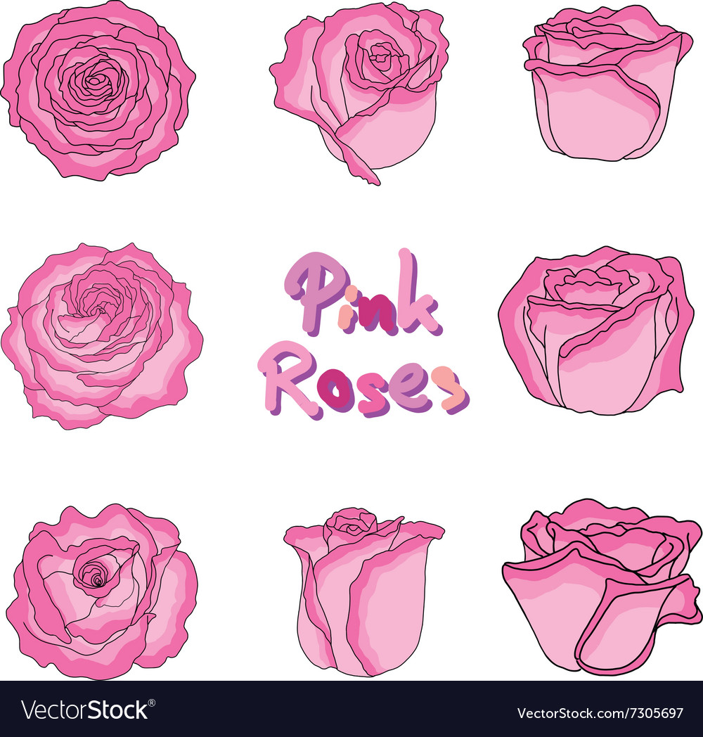 Set of pink roses