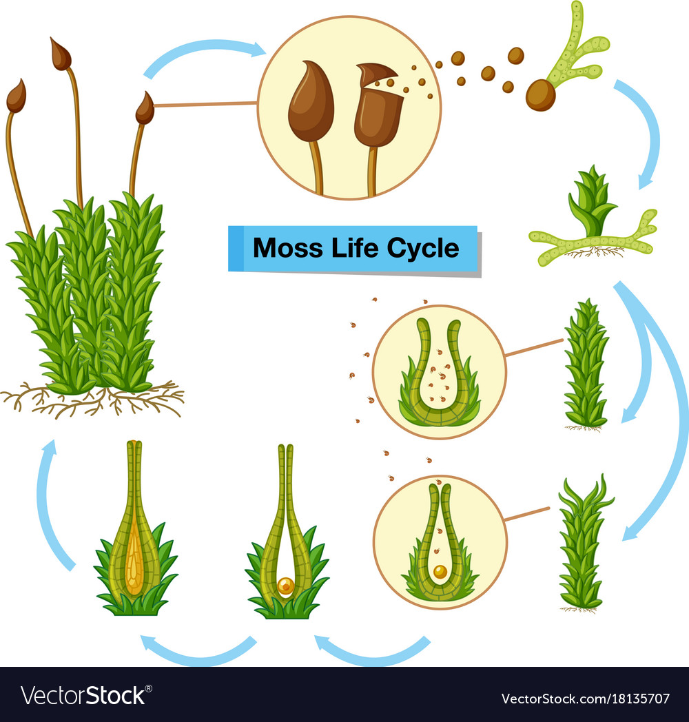 Diagram Of Moss - Wiring Diagram •