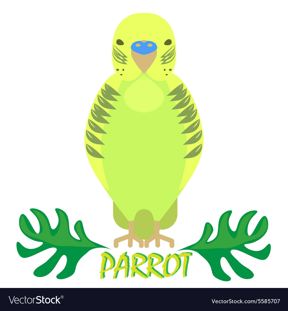 Parrot isolated front view on white Green bird