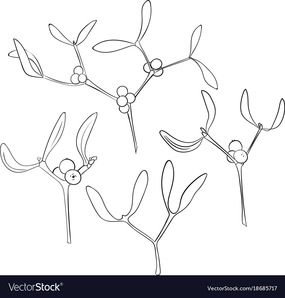 Set of four branch of hand drawn mistletoe in vector image