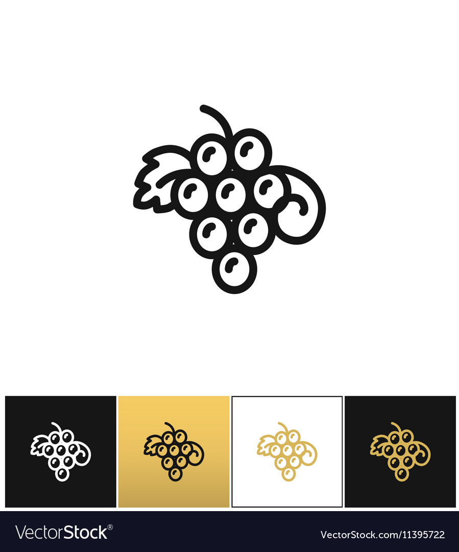 Hanging grapes or vine grape with leaves vector image
