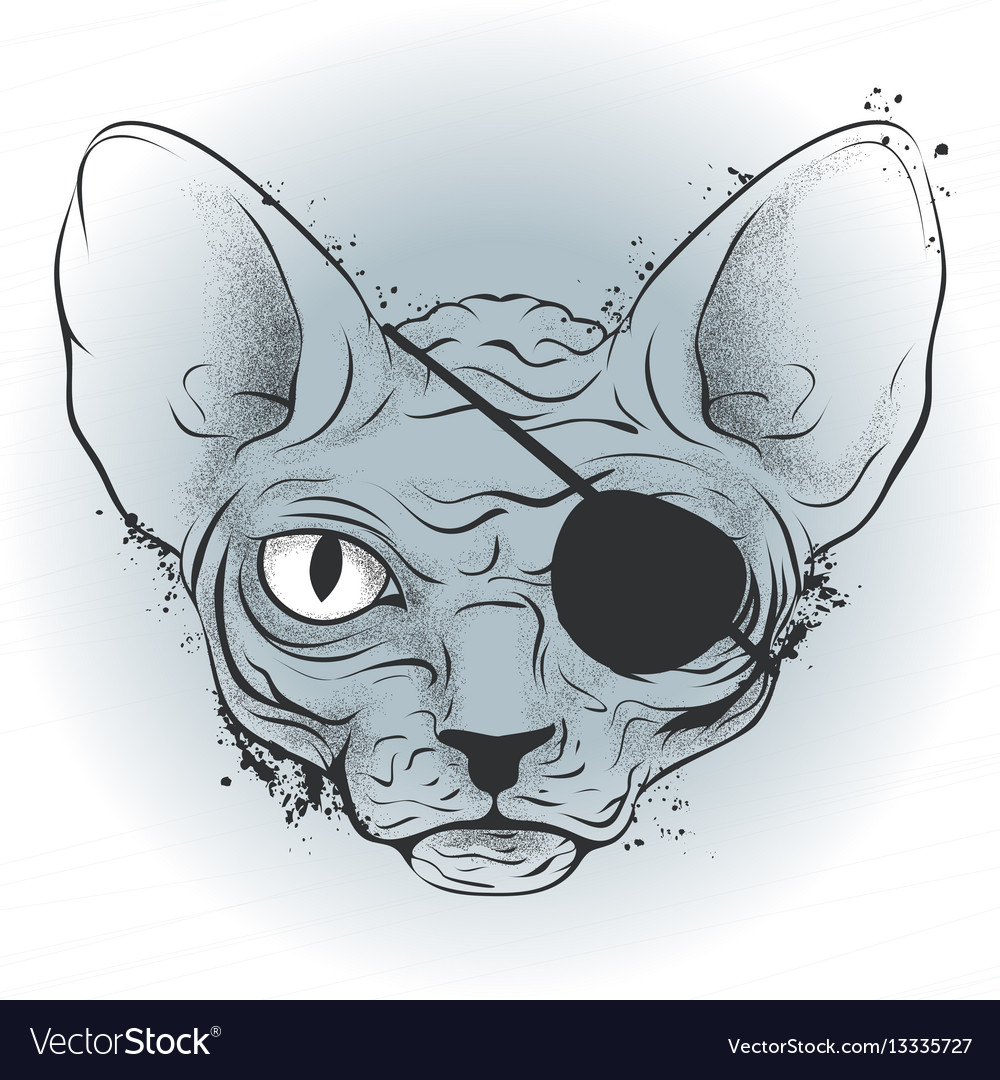 Ink drawing bald cat pirate with an eye patch