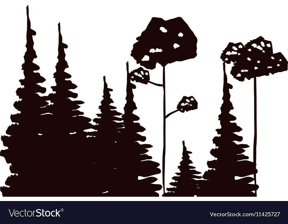 Monochrome forest with pines and leafy trees